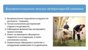 Должностная инструкция ветврача в сельском хозяйстве