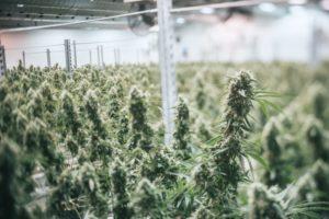 Что делают за употребление травы