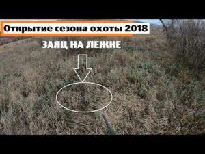 Охота на зайцев в белгородской обл открытие когда