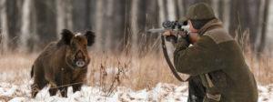 Открытие охоты на кабана лося в 2018 году