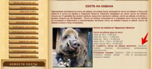 Лицензия на кабана охота осень 2019 стоимость