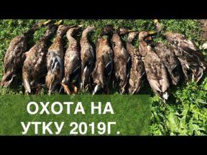 Дни охоты в 2019г ростовской области